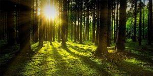 Bosque y sol irradiando