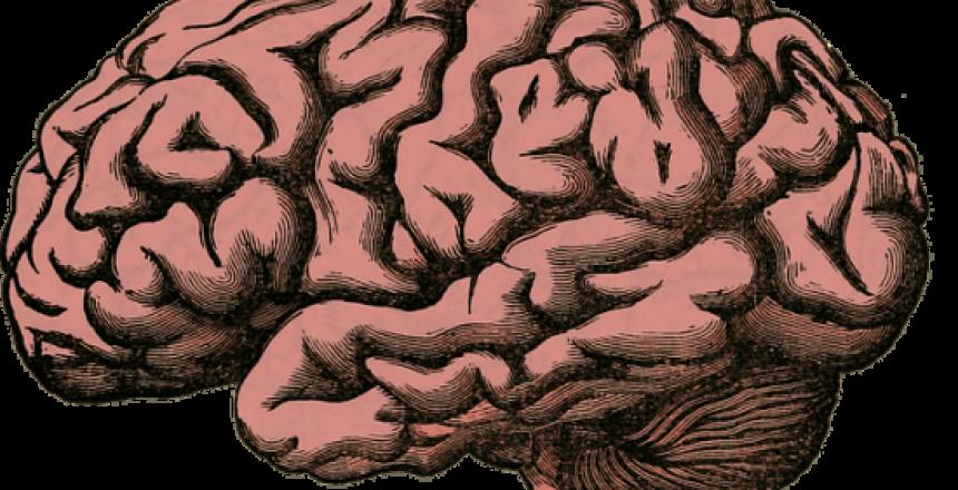 brain-512758_640 (1)